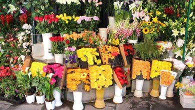 Photo de Carrément Fleurs dévoile les habitudes des français en matière de fleurs